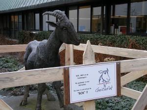 Geitefok zet geiten in quarantaine (Drachten)